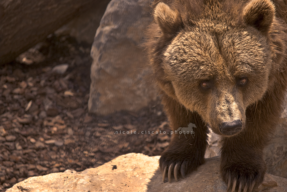 ..:: Sad Bear ::.. by firegold