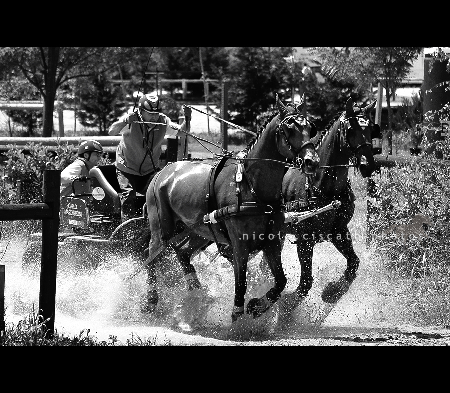 Combined Driving VI BW by firegold