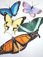 Butterfly Watercolor by Moundfreek