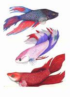 Kouri Fish by Moundfreek