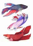 Kouri Fish