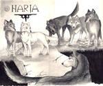 Harja