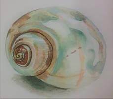 Watercolor Shell