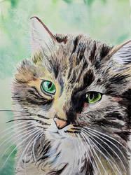 Pellla Watercolor