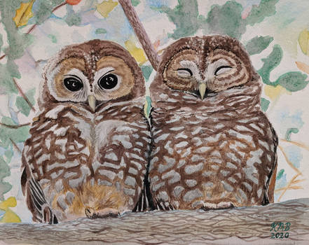 Watercolor Spotted Owls