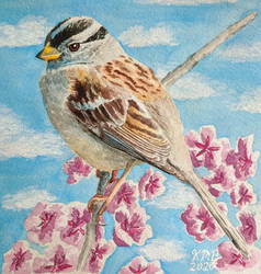 White Crowned Sparrow Watercolor