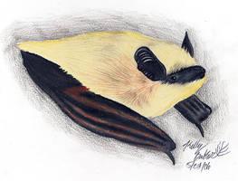 Miotis by Moundfreek