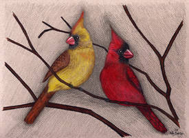 Cardinals by Moundfreek