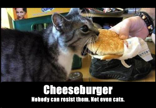 Cheeseburger cat by Racoonmaster