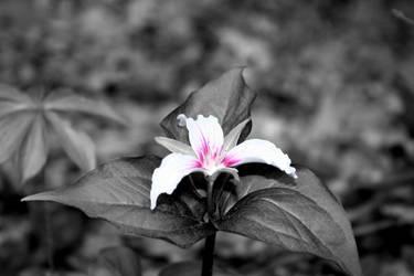 Una flora. by carrotcait