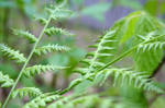 Cute little ferns.