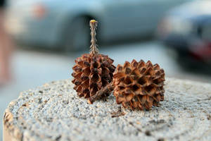 Mini-pinecones. by carrotcait