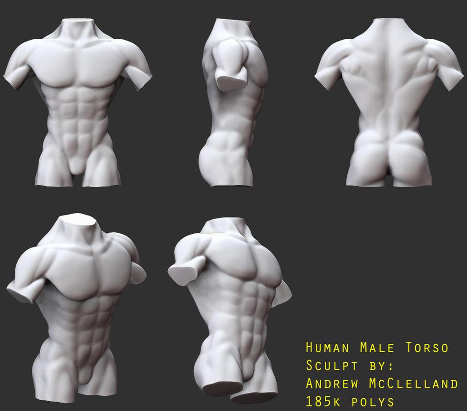 Human Male Torso Anatomy Study By Gaulica On Deviantart