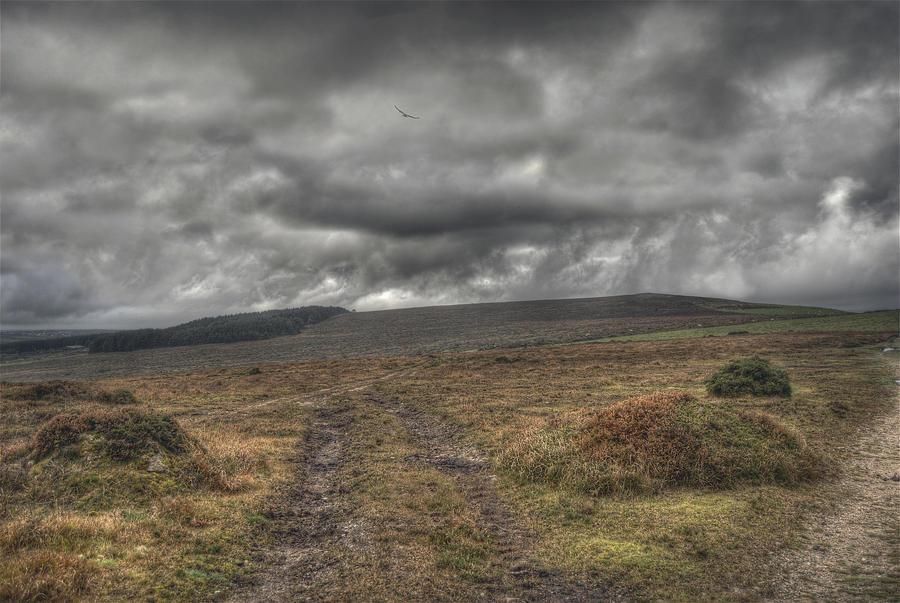 Landscape Stock 03..