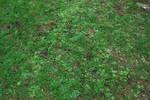 Grass Texture..