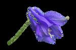 Blue Flower PNG..