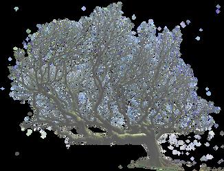 Leaning Tree PNG.. by AledJonesDigitalArt