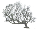 Leaning Tree PNG..
