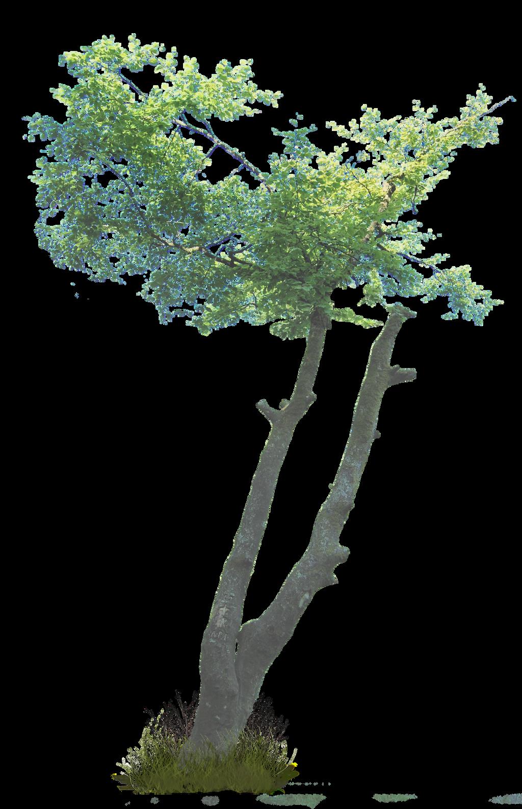 Tree PNG.. by WelshDragonStockNArt