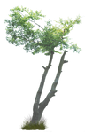 Tree PNG..