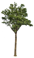 Tree 2 PNG.. by AledJonesDigitalArt