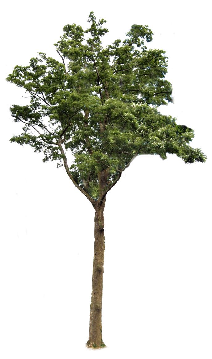 Tree 2 PNG.. by Alz-Stock-and-Art
