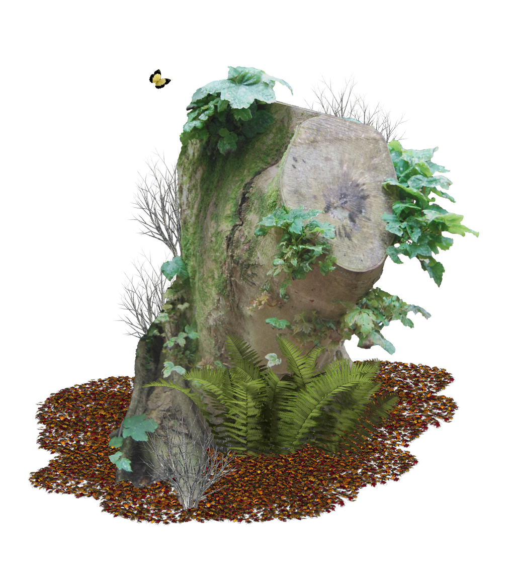 Tree Stump PNG.. by Alz-Stock-and-Art