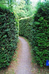 Narrow Pathway..