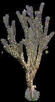 Dead Tree PNG..