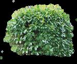 Bush 04 PNG..