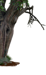 Creepy Old Tree Side PNG..