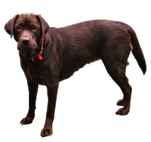 Dog PNG.. by AledJonesDigitalArt