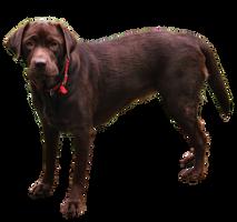 Dog PNG..