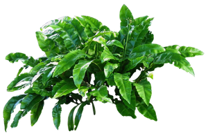 Leafy Plant PNG.. by AledJonesDigitalArt