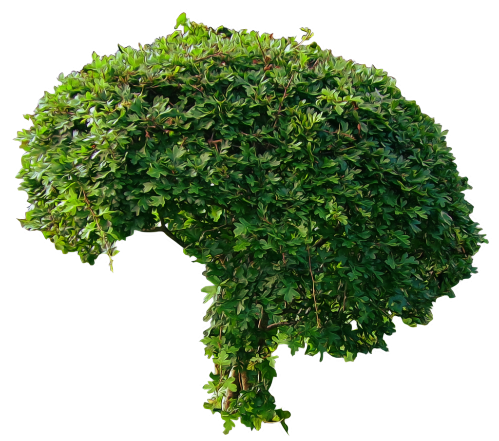 Small Green Bushy Tree PNG..