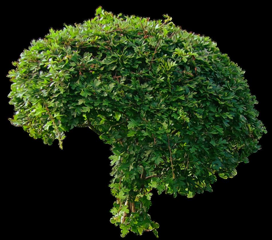 سكرابز اشجار صور اشجار للتصميم سكرابز شجر png صور اشجار small_green_bushy_tree_png___by_alz_stock-d7mx882.png