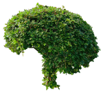 Small Green Bushy Tree PNG..