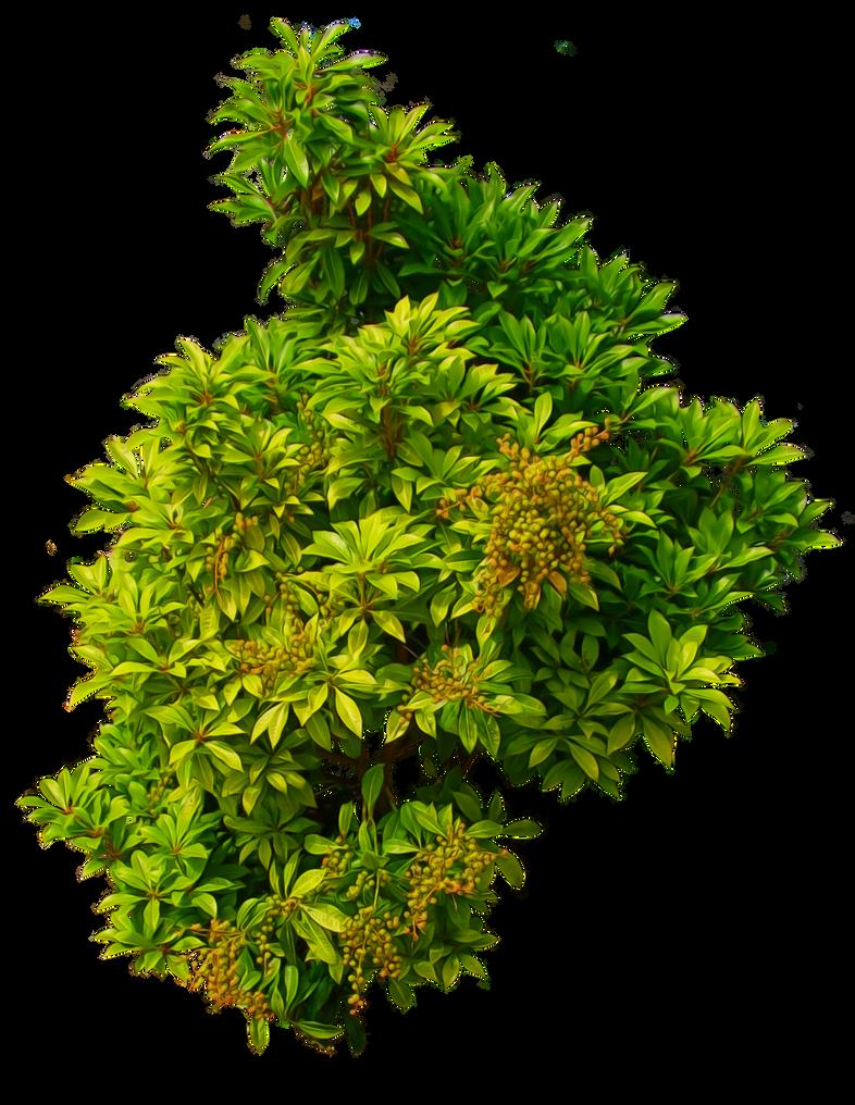 سكرابز اشجار صور اشجار للتصميم سكرابز شجر png صور اشجار shrub_01_png___by_alz_stock-d7nc699.png