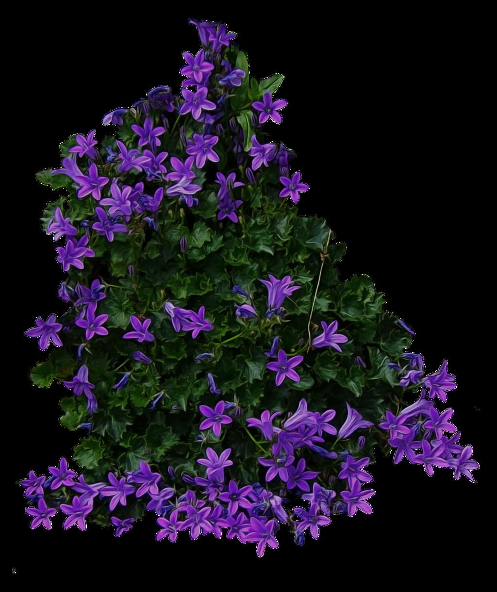 Purple Flowery Bush PNG by AledJonesStockNArt on DeviantArt