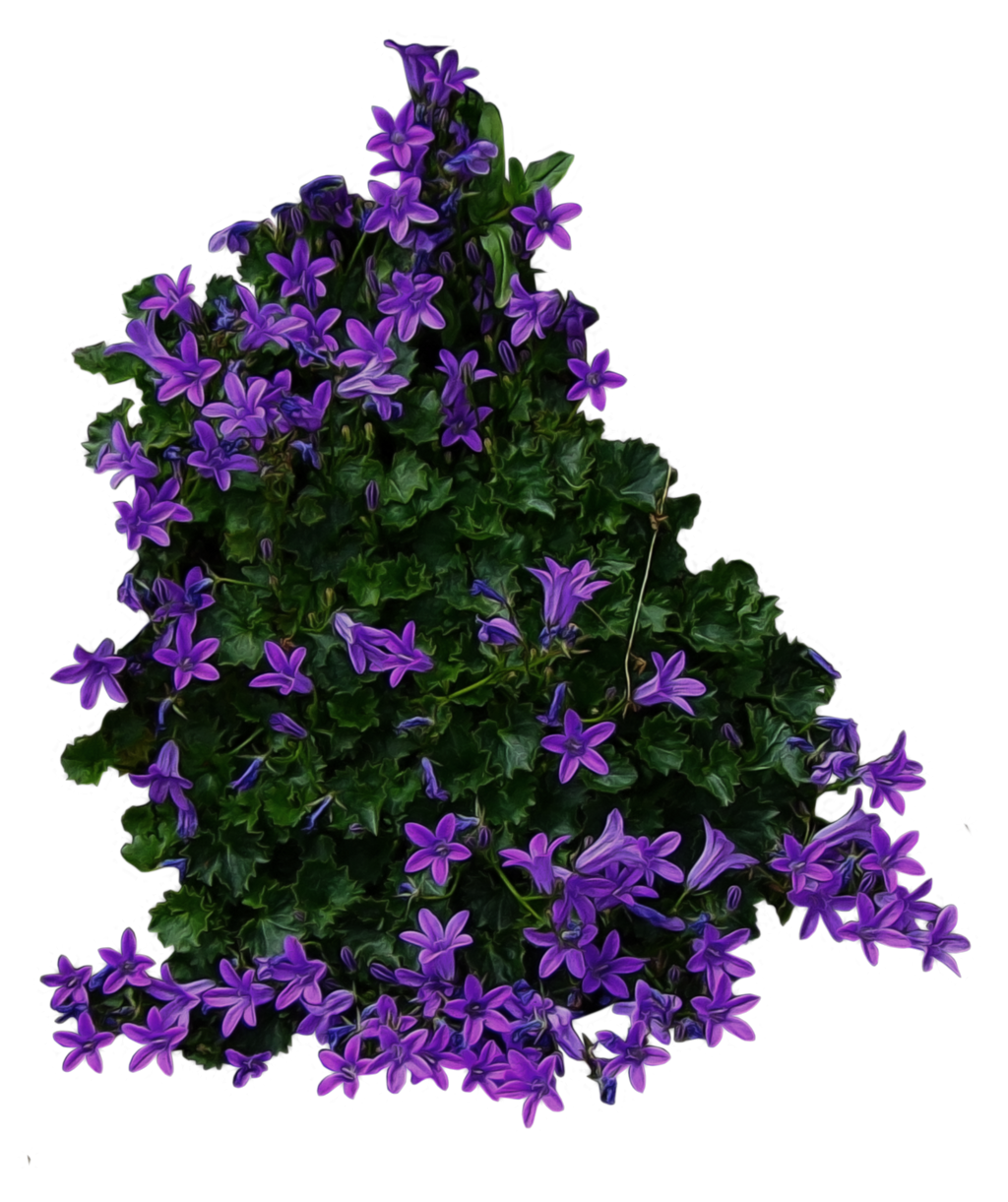 Purple Flowery Bush PNG..