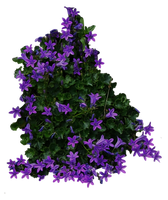 Purple Flowery Bush PNG.. by AledJonesDigitalArt