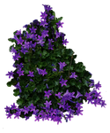 Purple Flowery Bush PNG..