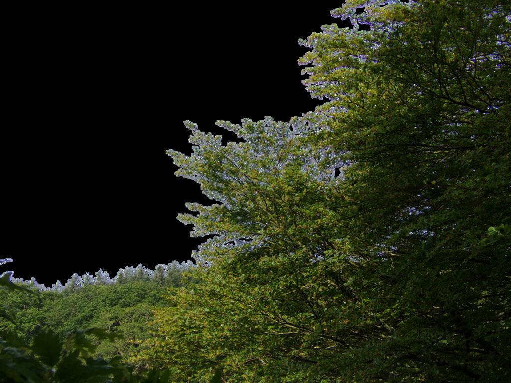 سكرابز اشجار صور اشجار للتصميم سكرابز شجر png صور اشجار nature_foreground_png___by_alz_stock-d7o75te.png