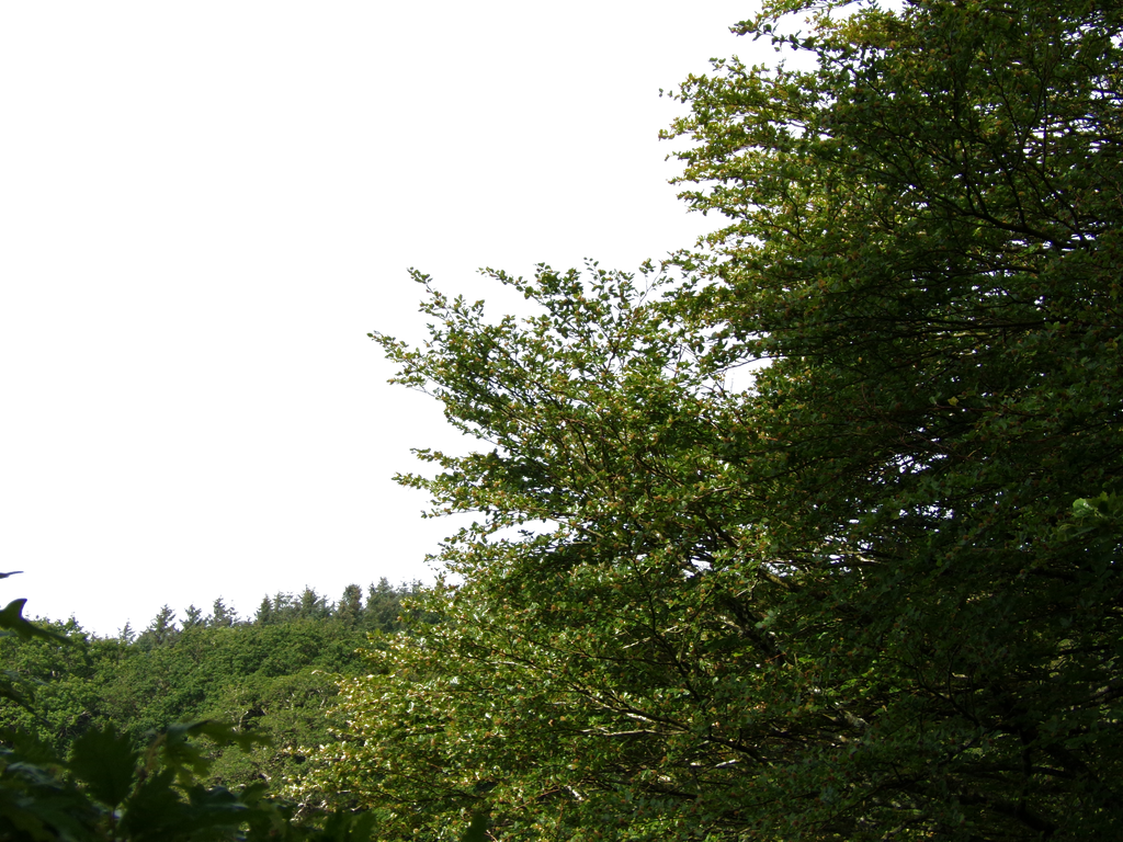 Nature Foreground PNG.. by AledJonesDigitalArt