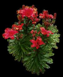 Red Lilies PNG.. by AledJonesDigitalArt