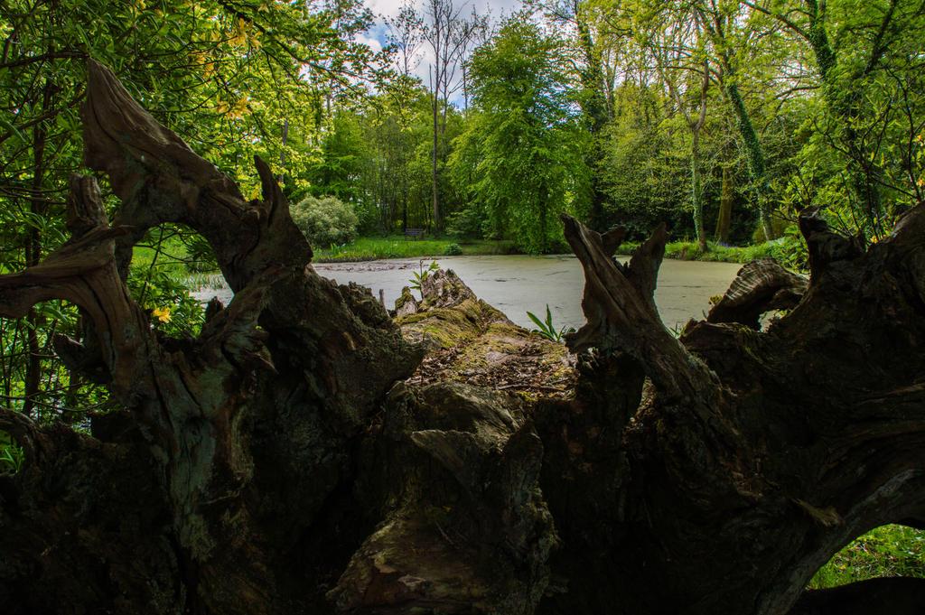 May 2015 Fallen Tree Stock.. by AledJonesDigitalArt
