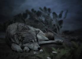 Sleeping wolf.. by AledJonesDigitalArt