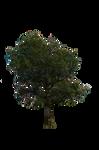 Tree Stock 01 July 2016..