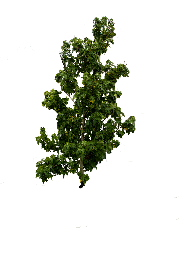 سكرابز اشجار صور اشجار للتصميم سكرابز شجر png صور اشجار cut_out_tree_stock_01_august_2016___by_aledjonesstocknart-dacjv1c.png