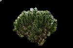 Green bush Stock August 2016..